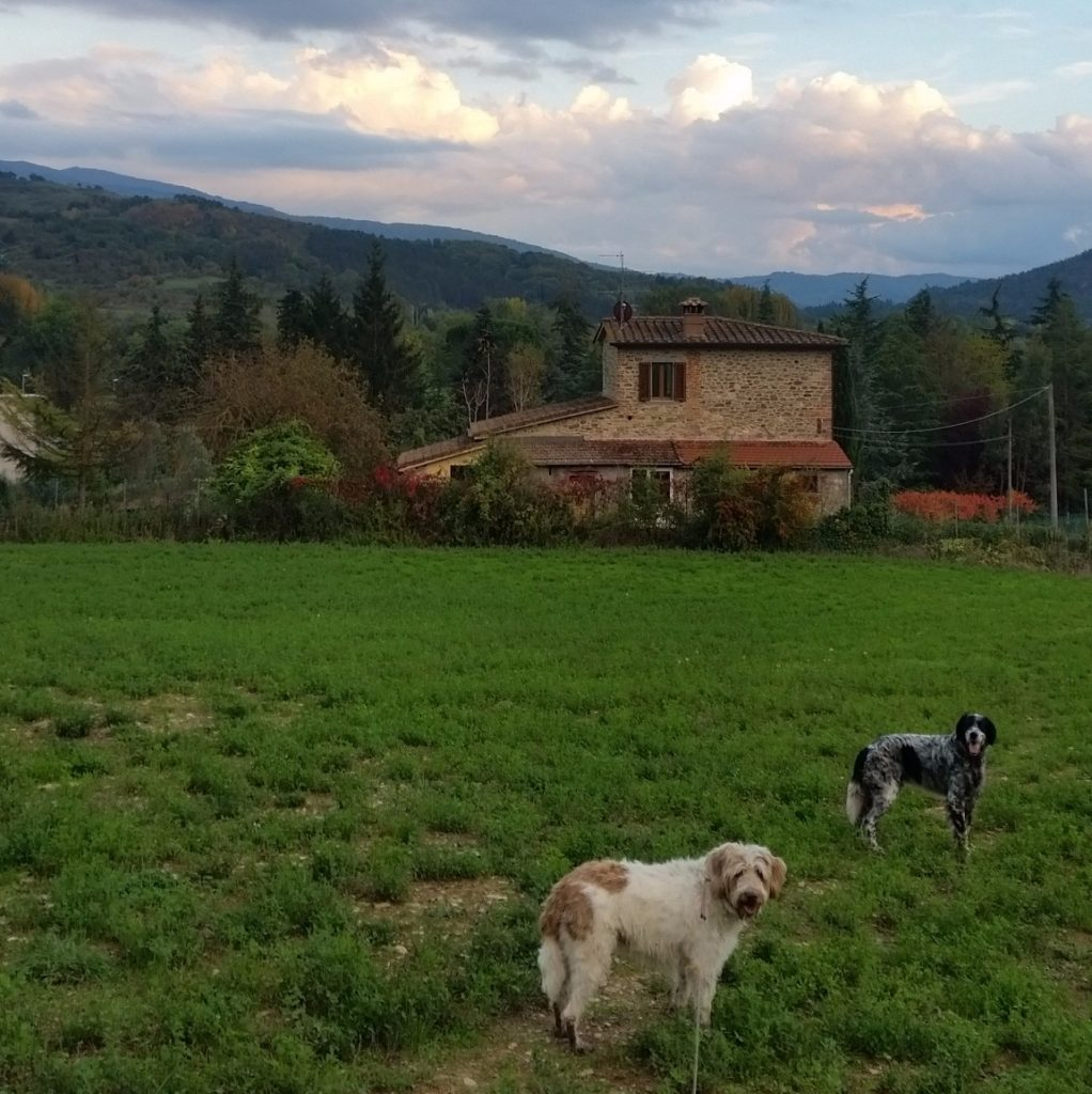 taking two dogs on a walk in tuscany