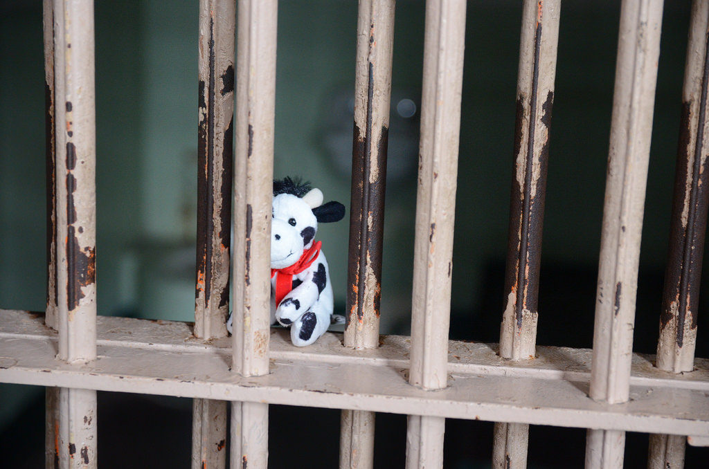 stuffed cow sitting in a jail cell