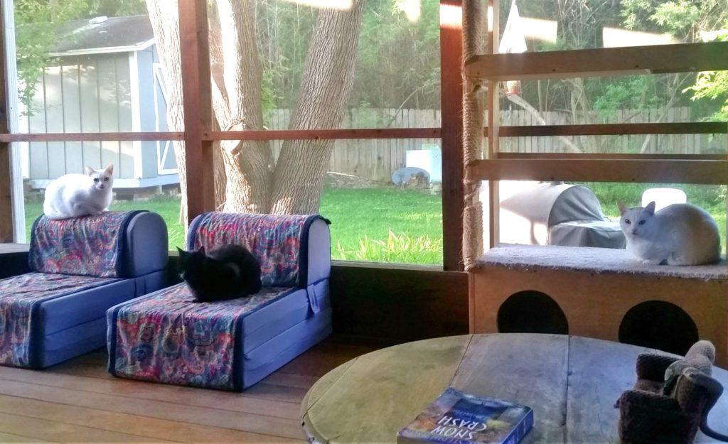 three cats on a porch