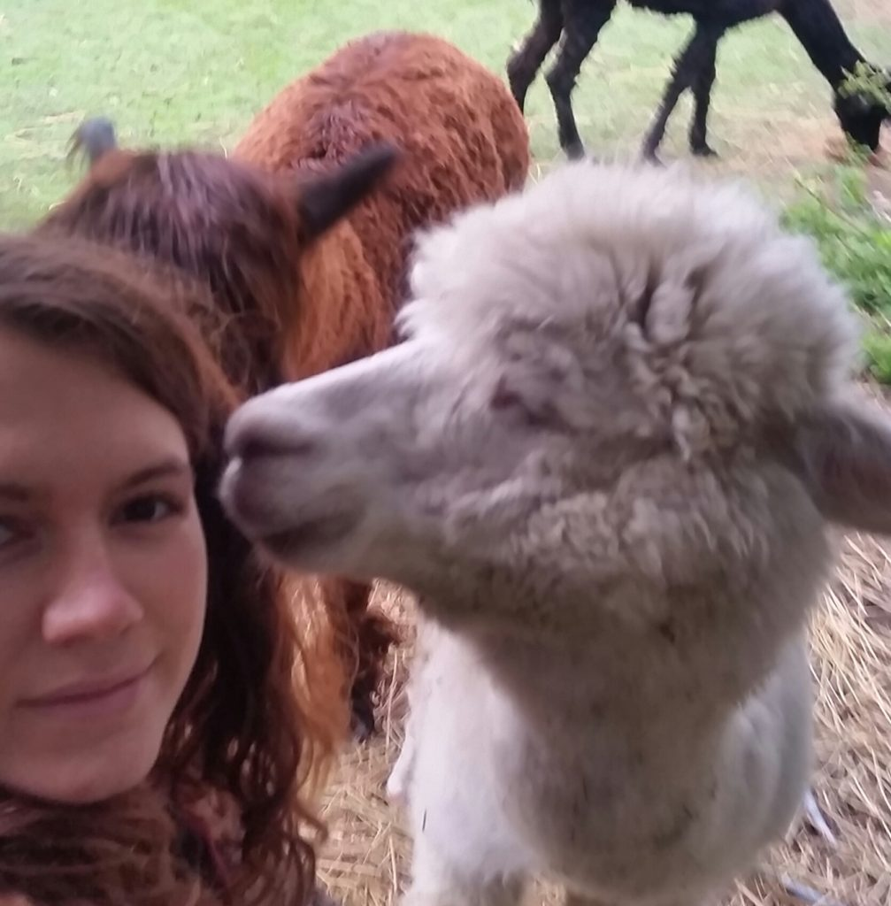 alpaca kissing meggan