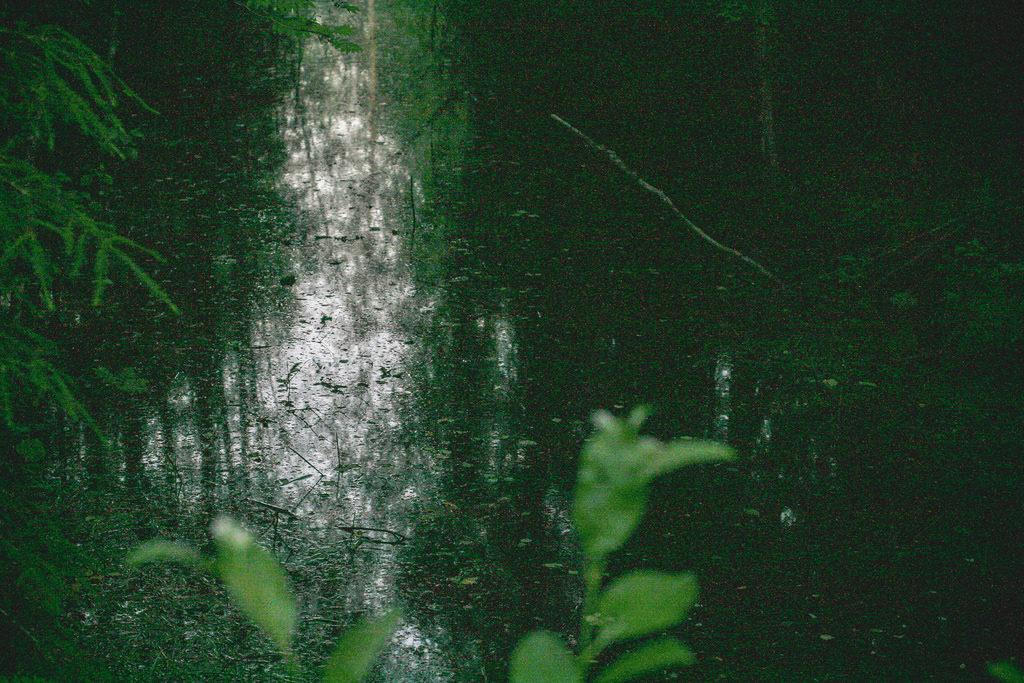 serene shot of a pond